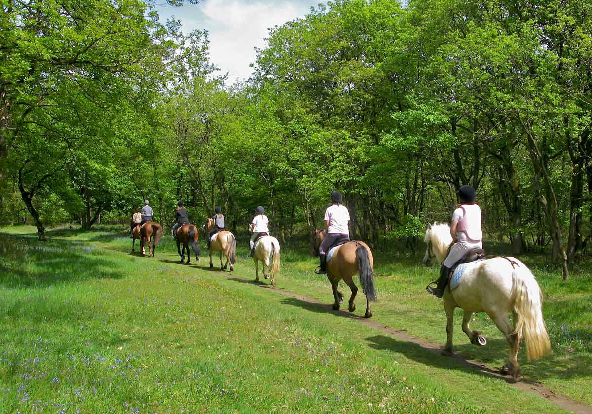 A modo cavallo
